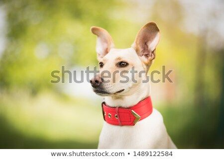 Stock Photo Amazing Portrait Of Cute Brown Crossbreed Dog With