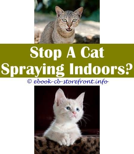 Video Of Manlike Home cat Spraying