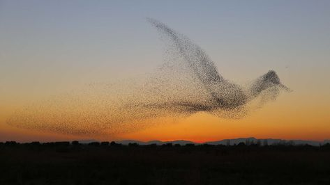 These are most amazing photos of starling murmurations
