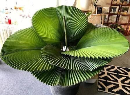Indoor Garden, Garden Plants, Indoor Plants, Exotic Plants, Tropical Plants, Office Plants, Green Life, Cool Plants, Plant Decor