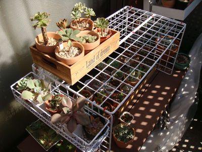 目次1 100均のワイヤーネット大活躍 2 ワイヤーネットと結束バンドでテーブルを作る 3 風通しのいい野菜かごを作る 4 お庭の小物もすっきり 5 多肉植物や植物のディスプレーや温室に 6 皆さんのワイヤーネット アイディア集 100均の 100均 ワイヤーネット