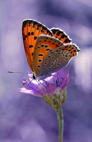Kelebek Boyama Insecta Cicek Kelebekler Doga Resimler