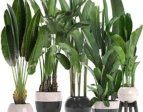 Plants 3d Model In 2020 Indoor Plants Plants House Plants Decor