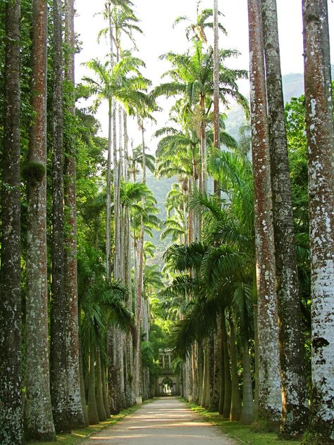 Rio de Janeiro Botanical Gardens, Brazil                                                                                                                                                     Plus