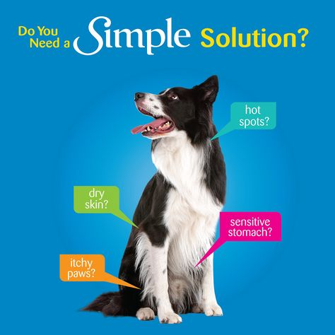 Wellness Simple Natural Dry Limited Ingredient Dog Food Duck Dogfood Best Dog Food Dry Dog Food Small Breed Dog Food