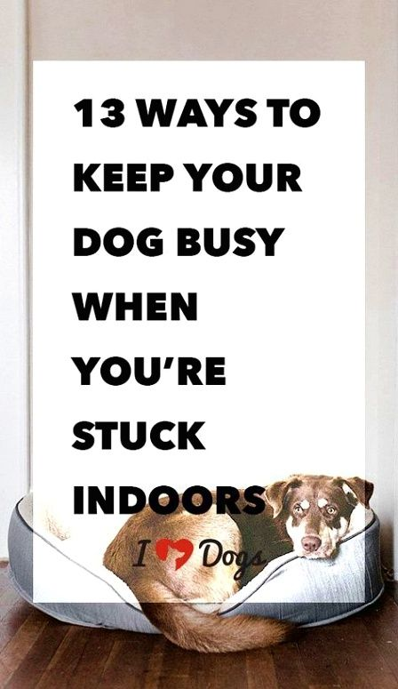 Dog Training Hacks This Will Build A Good Connection To The Crate