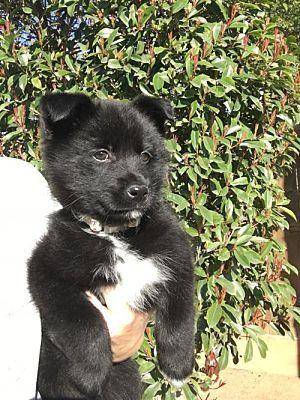 No Longer Listed No Update Celebi A Female Border Collie For Adoption At Animal Compassion Team Of California Fresno Ca Kitten Adoption Border Collie Pets