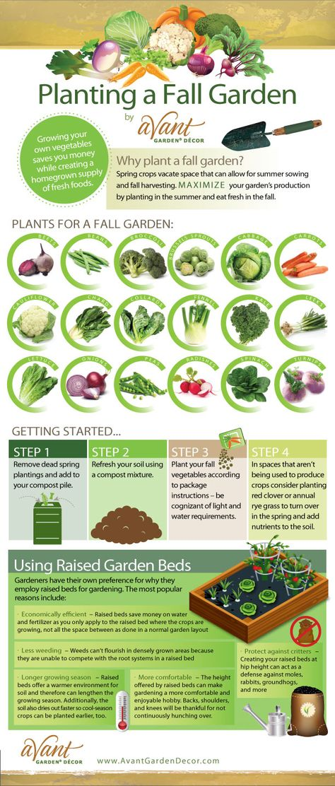 A  great  #Infographic  #Gardening  guide  on  how  and  what  to  plant  this  Fall