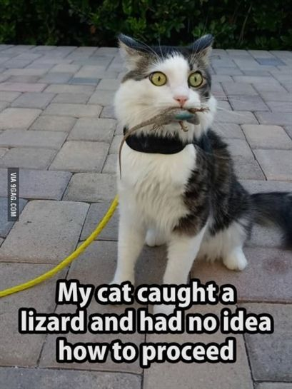 More Memes Funny Videos And Pics On 9gag Animals And Pets In