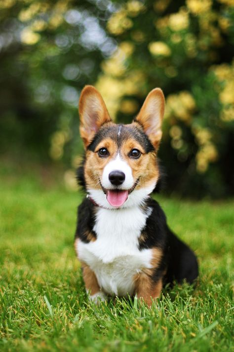 25 Cutest Dog Breeds