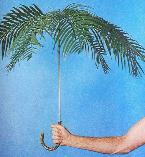 Palm tree umbrella why not?