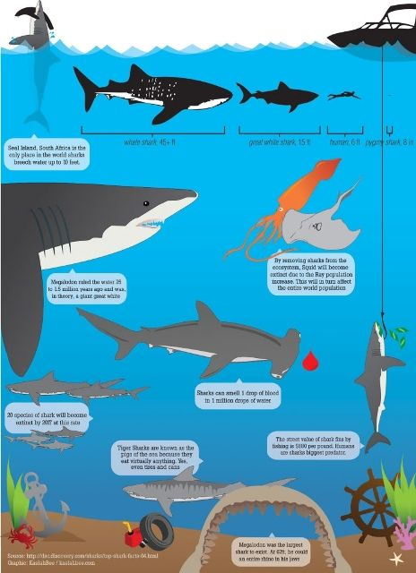 Just in time for #sharkweek, a really cool infographic on sharks!