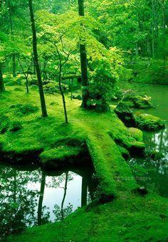 Moss Collection Landscape Nature Moss Garden