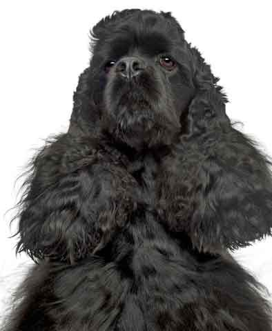 Alpha Dog Training And Behavior Alpha Dog Alpha Dog Training Dogs