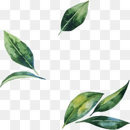 Hand Painted Watercolor Green Leaf Decoration Pattern In 2020