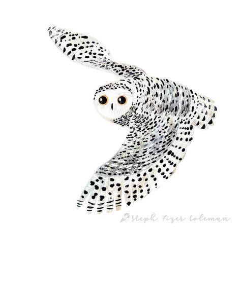 Stephanie Fizer Coleman - snowy owl illustration #photoshop #childrensillustration #illustration #birdart