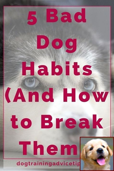 1 Have Dog Behavior Problems Learn About House Training A Mastiff