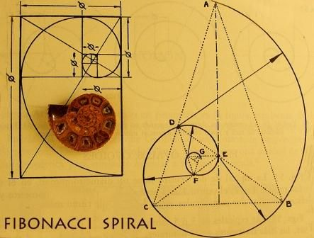 Fibonacci Trading Sequence For Forex
