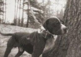 Interview with Dave Adams   Game Dog History   For the True