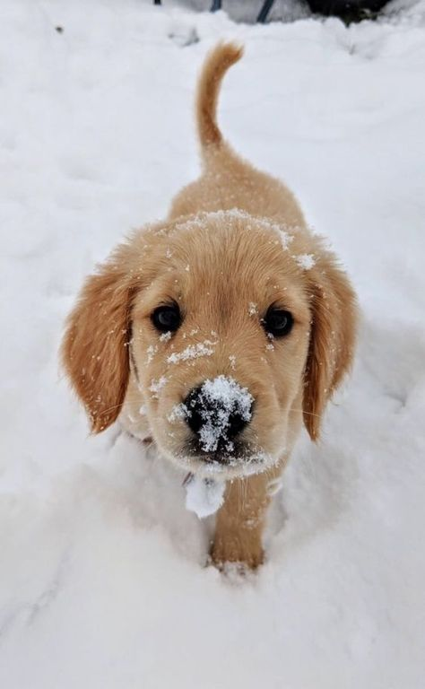 7 Dangerous Myths About Dogs And Winter That We Need To Bust