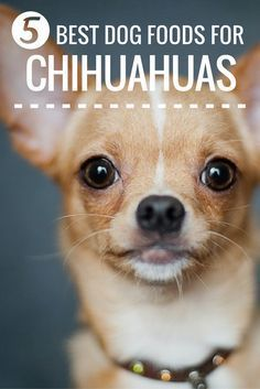 7 Best Dog Foods For Chihuahuas Powering Your Pint Sized Pup