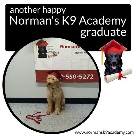 Duke Ferguson S Certified Professional Dog Trainer School Shadow