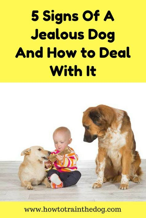 5 Signs Of A Jealous Dog And How To Deal With It Dog Training