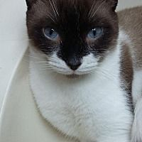 Pin By Lea Nichols On Helping Precious Animals Cats Pets Adoption