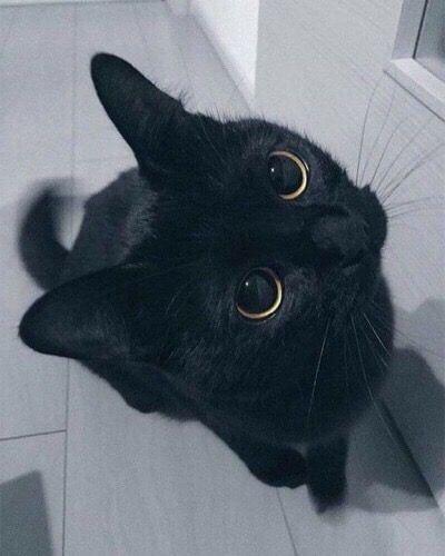 Billie Kucing Cantik Anak Kucing