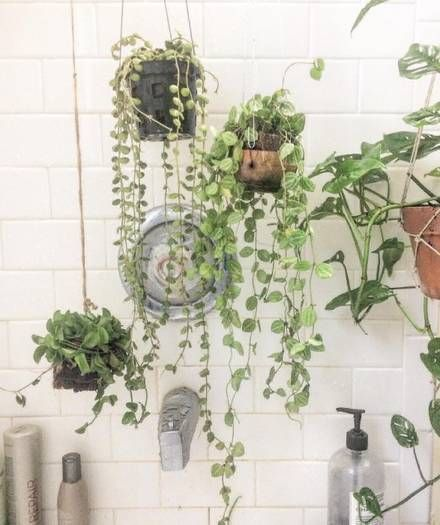 Shower Plants The Latest Must Have Decor Accessory Shower