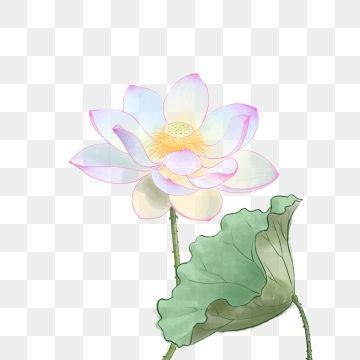 Lotus Lotus Painting Flower Bird Purple Backgrounds