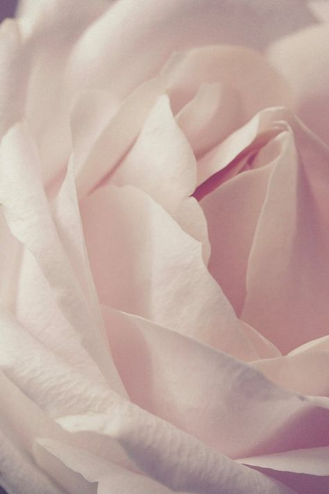 One of many great free stock photos from Pexels. This photo is about mac wallpaper, petals, rose Rose Gold Wallpaper, Flower Background Wallpaper, Flower Backgrounds, Fun Fold Cards, Instagram And Snapchat, Vegan Beauty, Pink Aesthetic, White Roses, Blush Roses