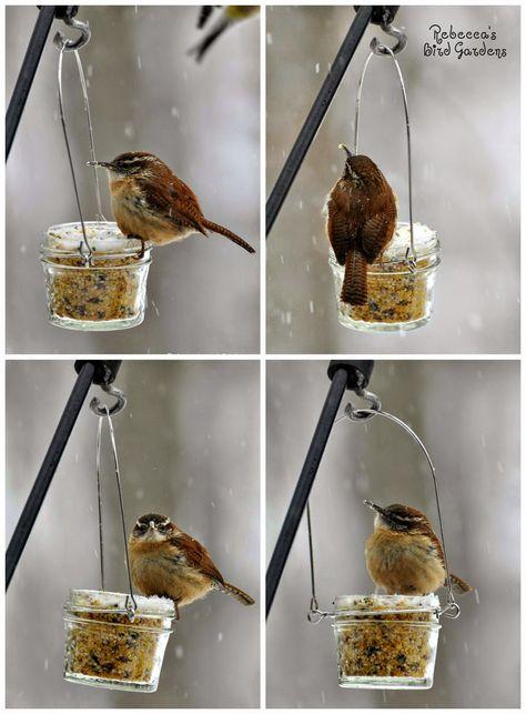Rebecca's Bird Gardens Blog: DIY Mason - or Jelly Jar - Suet Feeder - The Carolina Wren