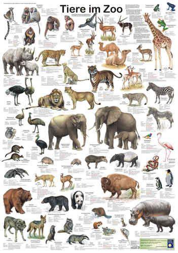 Tiere Im Zoo Tiere Saugetiere Amerikanischer Schwarzbar