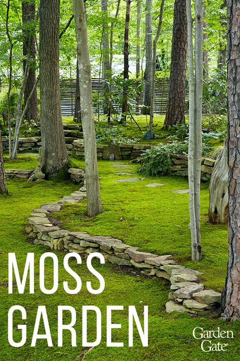 Discover David Spain& marvelous moss garden and see how he utilizes different types throughout his garden whether it be to replace turf or add to containers. Easy Garden, Lawn And Garden, Backyard Garden Ideas, Backyard Garden Landscape, Balcony Garden, Outdoor Landscaping, Outdoor Gardens, Florida Landscaping, Formal Gardens