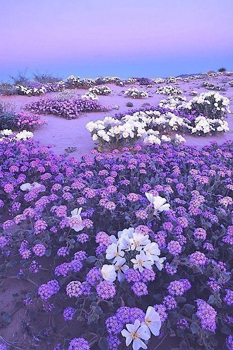 Violett Flieder Lila Lavendel Flieder Lavendel Lila Rain Violett Lila Blumen Lavendel Lila Garten
