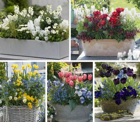 Jardinieres De Printemps Composez Les En Septembre Remerciez