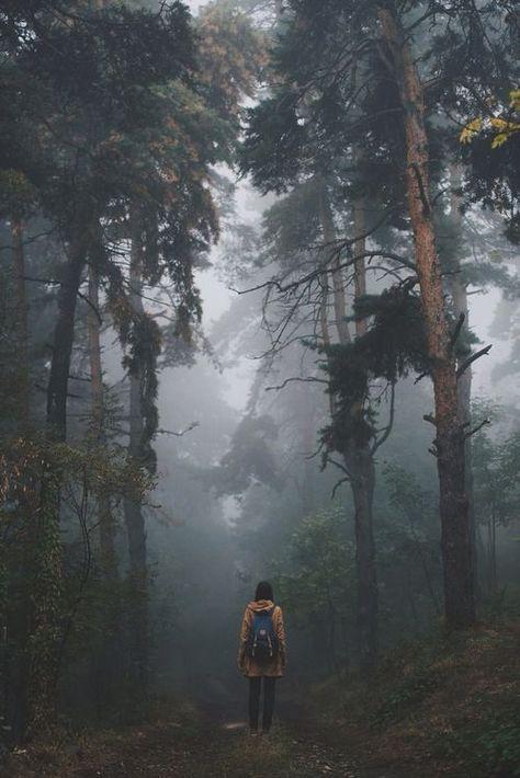 foggy adventures: