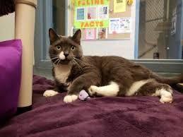 Good Home For Free Kittens In Waterloo Kitten Adoption Kittens