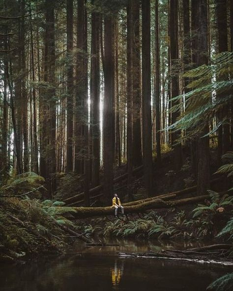 Just Pinned to Landscapes: Beech Forest Victoria Australia....