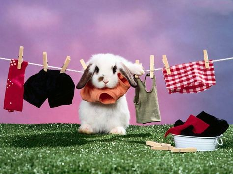 Rabbit Wallpapers Free Download Cute White Hd Desktop Wide Images 1024 768 Pictures Of Rabbits Wallpapers Cute Bunny Pictures Rabbit Wallpaper Bunny Pictures