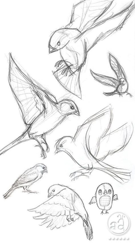 40 Free & Easy Animal Sketch Drawing Ideas & Inspiration – Brighter Craft