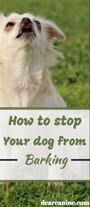 Dog Training Lay Down Dog Training Videos For Kids Best Dog