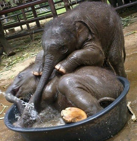 Wenn Sie Nicht In Die Wanne Wollen Cute Baby Elephant Elephants Photos Baby Elephant