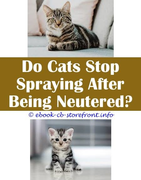 12 Enthralling Cat Stop Spraying Neutered Admirable