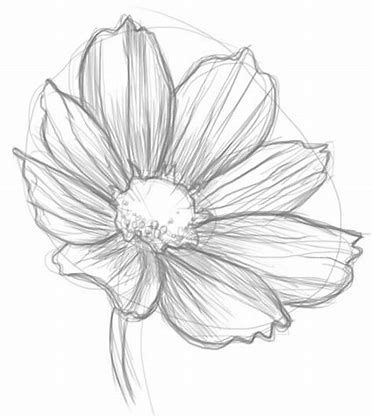 Image Result For Easy Sketches Of Flowers Drawings Flower