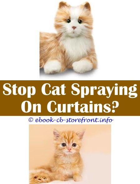 4 Considerate Clever Tips Sour Apple Spray For Cats Do Male Cats Still Spray After Being Fixed Do Male Cats Still Spray After Being Fixed Cat Mace Sp