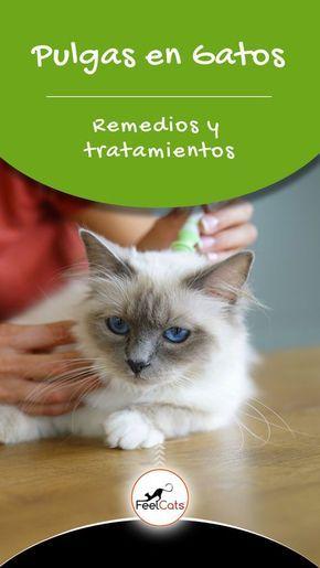 110 Ideas De Gatos En 2021 Gatos Perro Gato Mascotas