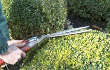 Tuinonderhoud van raaijen hoveniers garden maintenance for Garden maintenance van