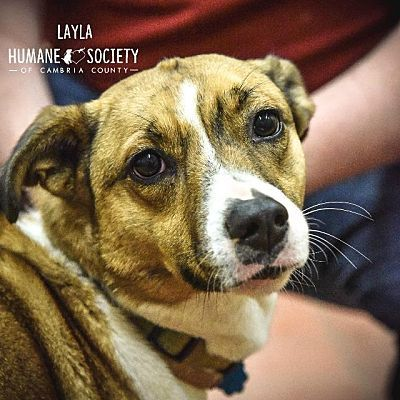 Humane Society Of Cambria County Dog Pictures